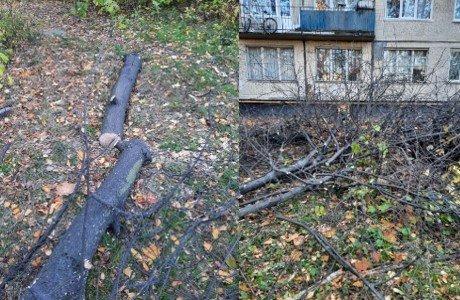 Спилили и сухие, и зеленые: администрация Фрунзенского района занялась варварской вырубкой деревьев