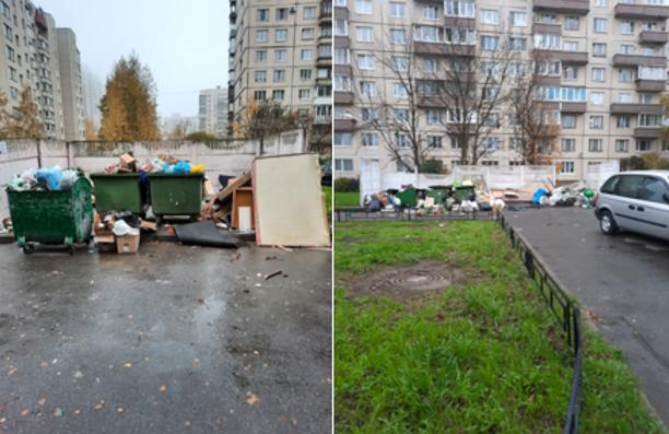Улицы и дворы Невского района засраны больше, чем берега Ганга